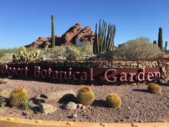 Spend the day at the Desert Botanical Garden in Phoenix Arizona