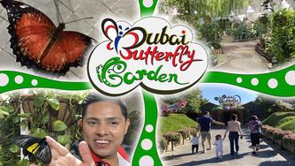 See 15,000 butterflies at the Dubai Butterfly Garden