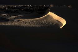 דיונה פראית Truculent Dune 2019