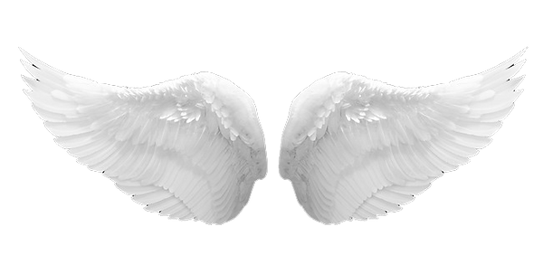 angel wings 2.png