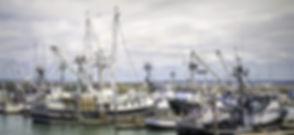pesca-flotta.jpg
