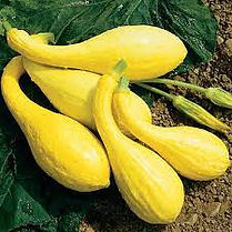 yellow squash.jpeg