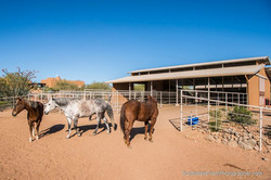 Boarding packages at horse hotel AZ