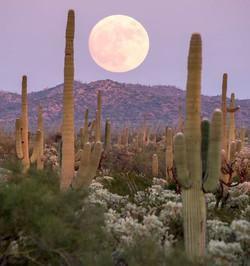 Full moon over the desert