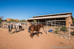 Multiple horse boarding packages