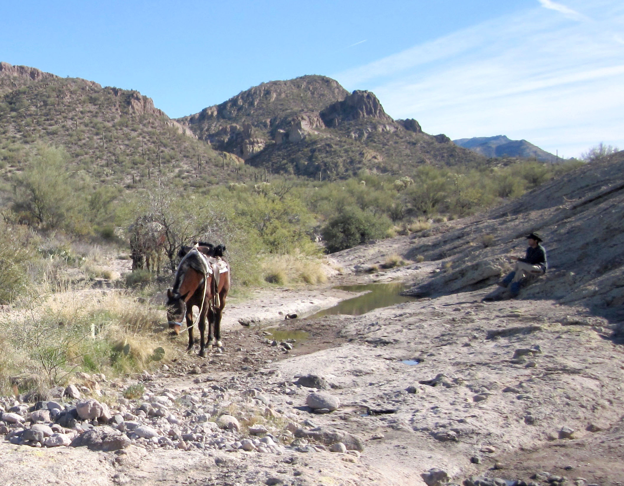 Remote horseback riding
