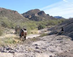 Remote horseback riding