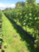 Forest Edge Vineyard for weddings and events