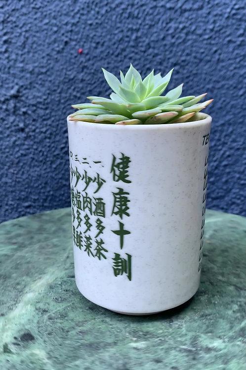 Echeveria in Ceramic Cup
