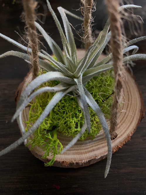 Hanging Faux Air Plant