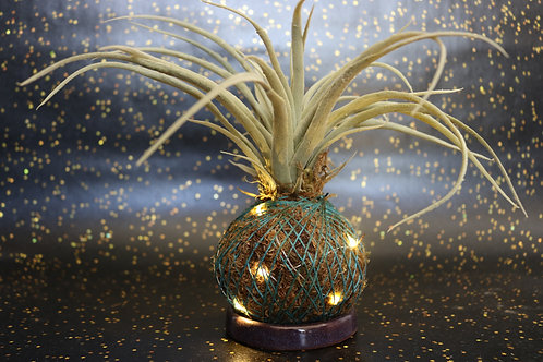 Light Up Faux Succulent Kokedama
