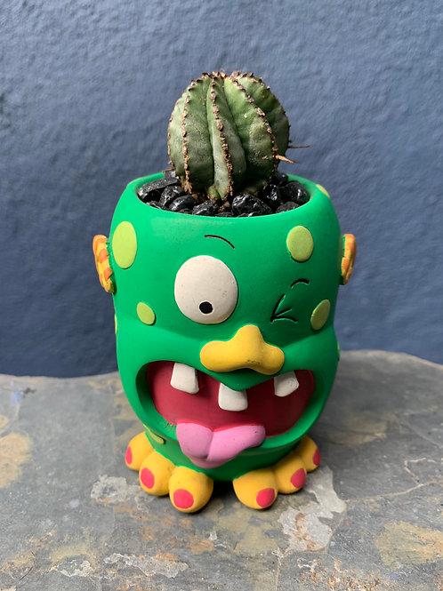 Monster Euphorbia