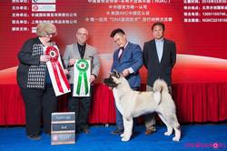 Houdini @ Puppy BIS 2, Bejing China