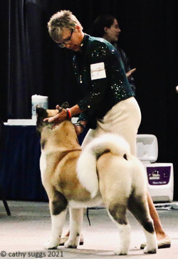 AM Bred 1st @ National Specialty Week 2021