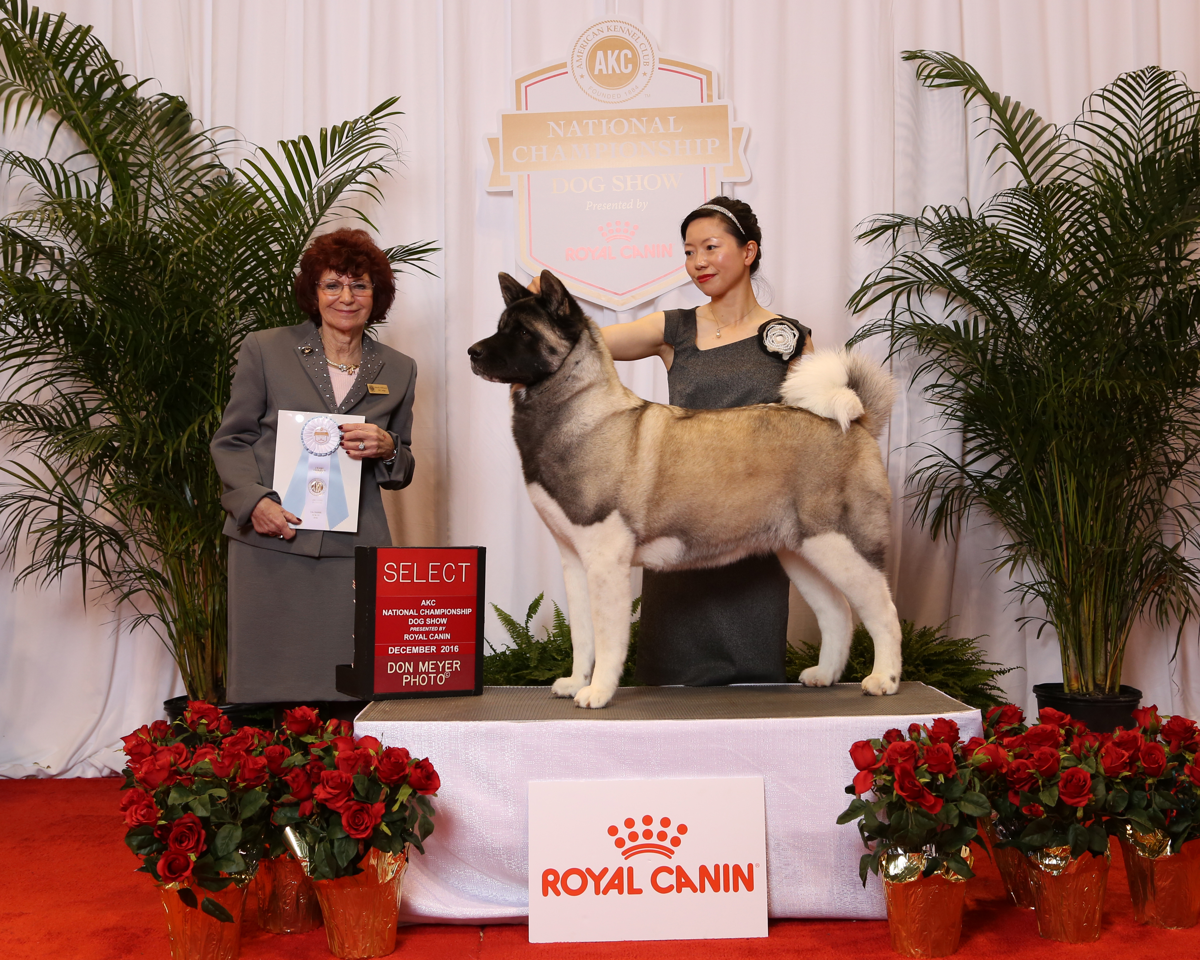 Dream SB @ AKC National Championship