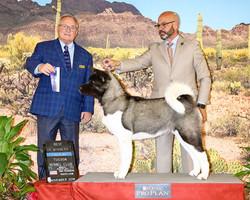 BOW @ Tucson Kennel Club Show