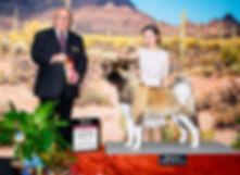 Tucson BOB OH G2 2019.jpeg