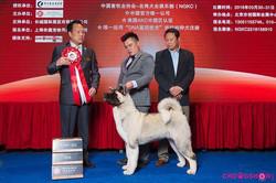 Houdini @ Puppy BIS 2, Beijing China