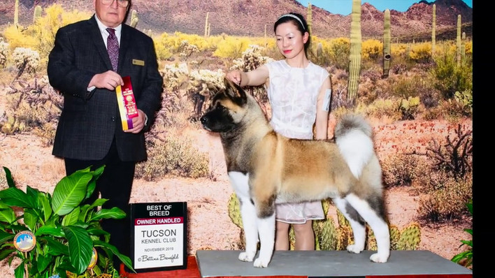 Best of Breed @ Tucson Kennel Club 2019