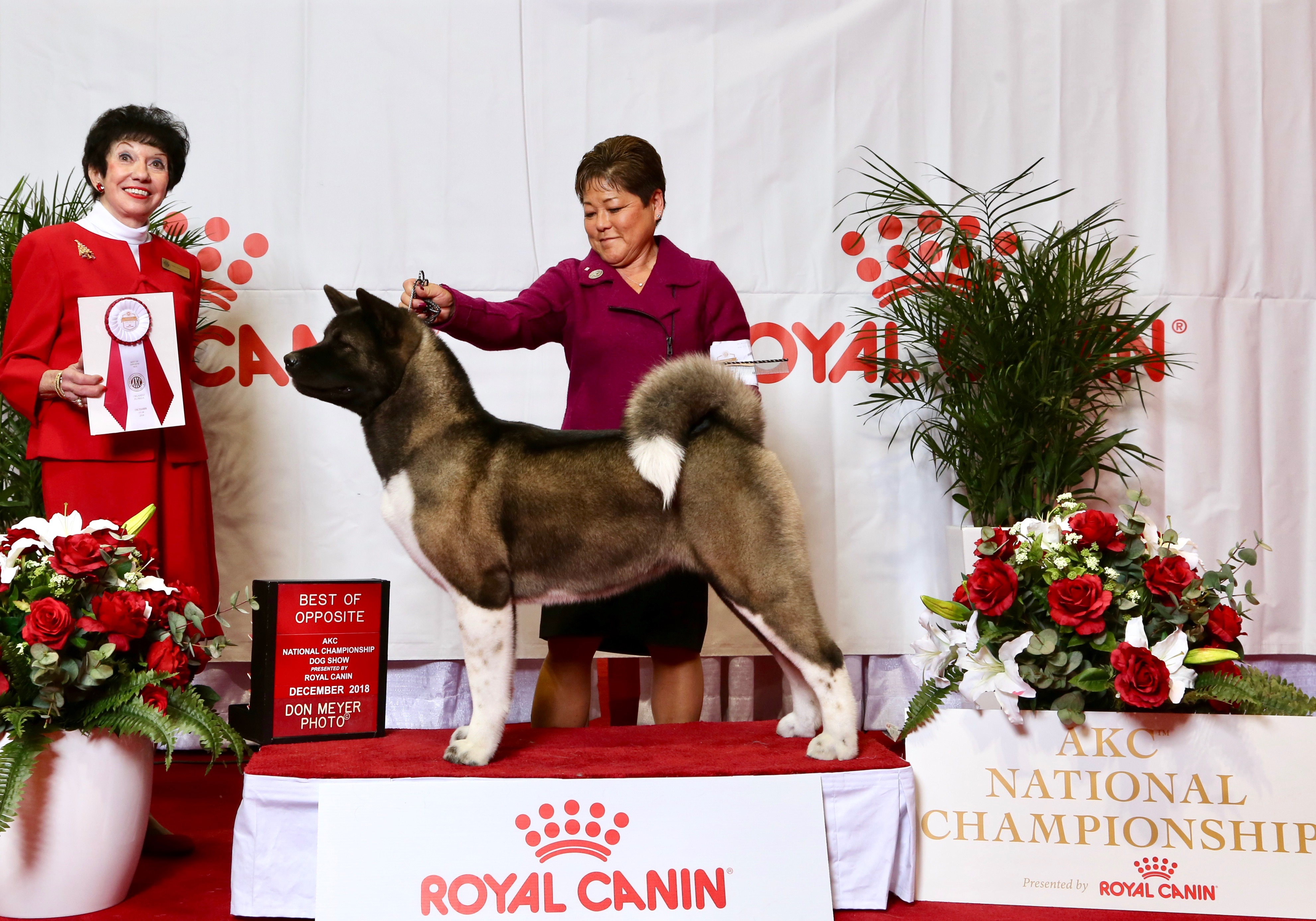 Couture BOS @ AKC National Champion