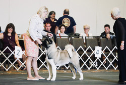 1st AM Bred @ National Reg Specialty