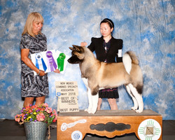 Indica @ BOW & Best Puppy In Show