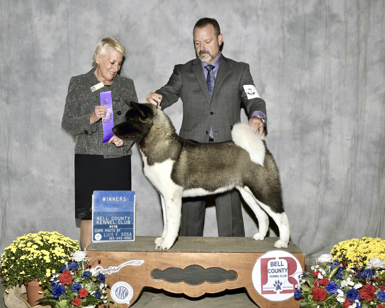 14 Months WBs @ Belton Kennel Club
