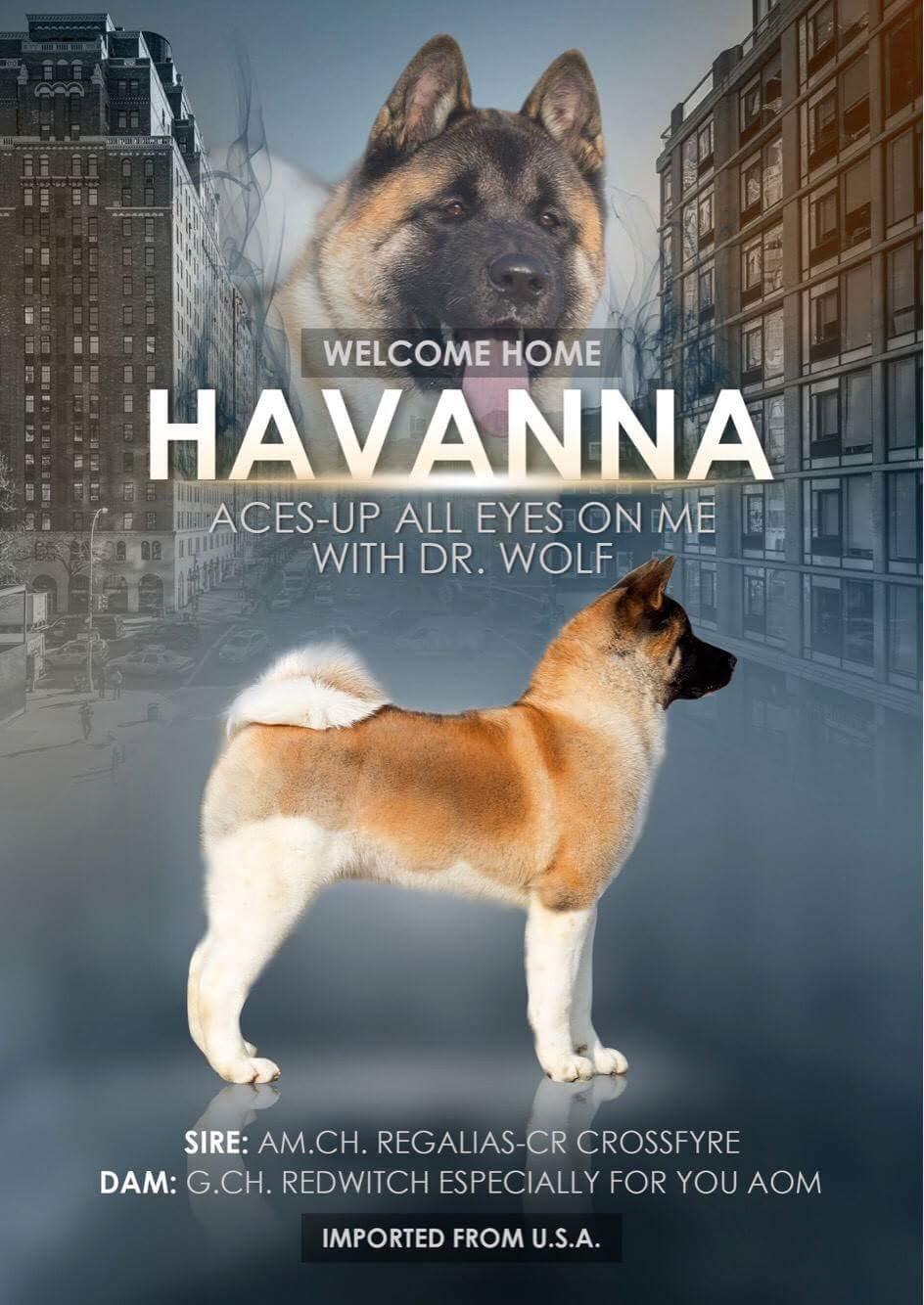 Havanna Ad