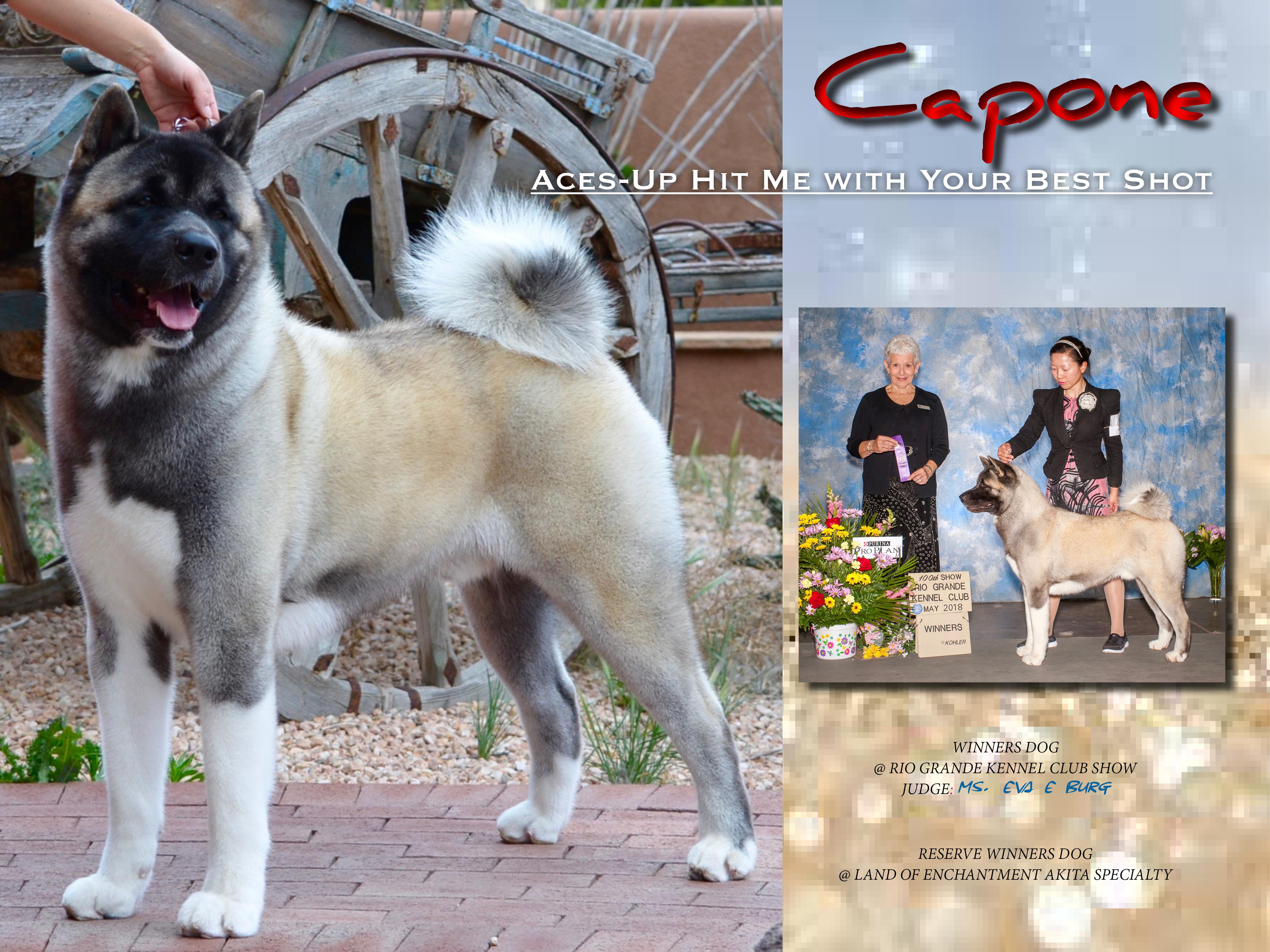 Capone ABQ Show Ad