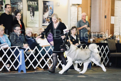 National Specialty 2019