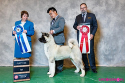 Houdini @ Puppy BIS, Qingdao China