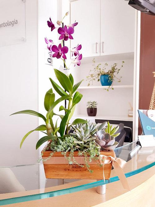 Jardineira com Orquídea e Suculentas
