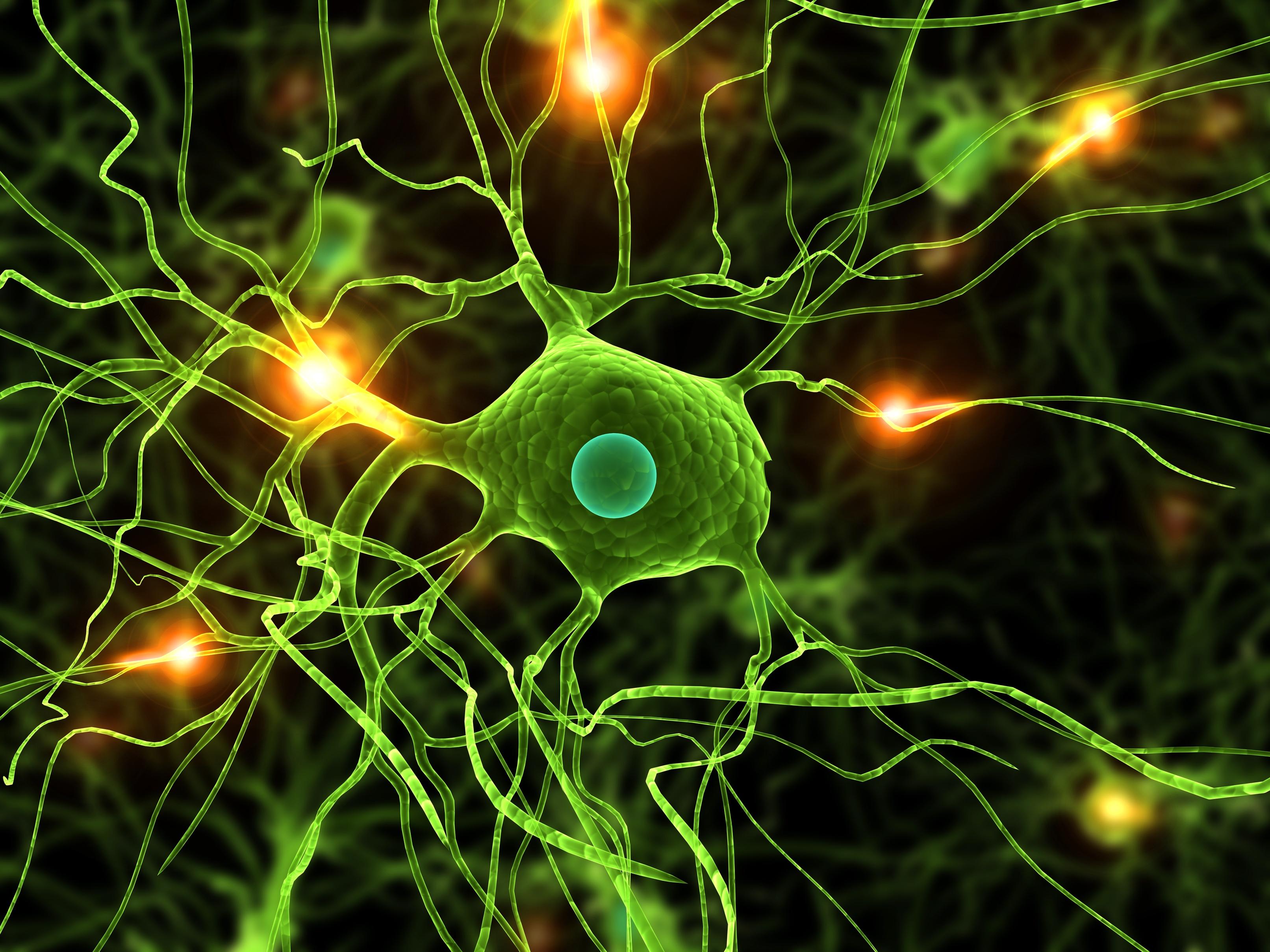 Faszination Gehirn