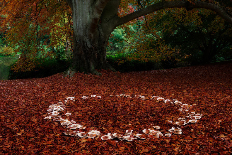 GROUP 1 20 FAIRY RING by John Lewis