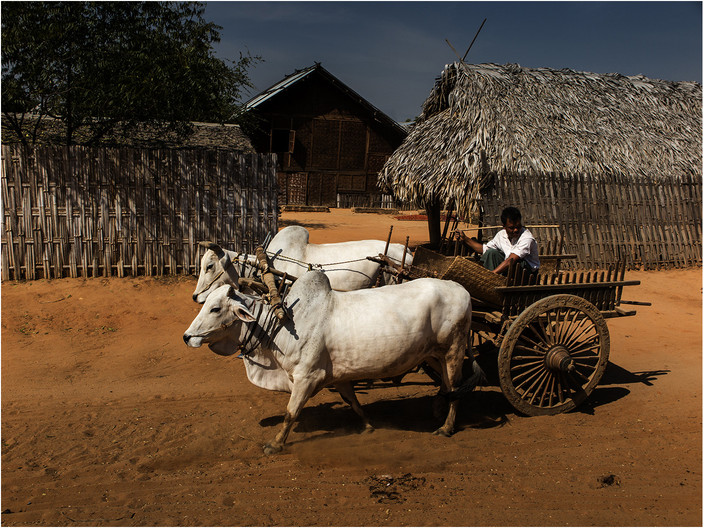19 TRADITIONAL BURMESE OX AND CART by David Parkinson