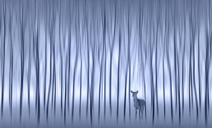18 MYSTICAL WINTER WOODS by Pam Sherren