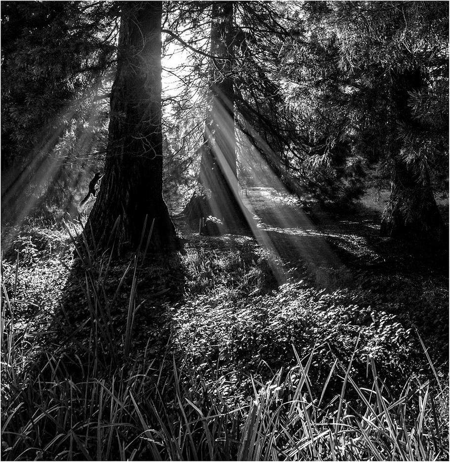 16 FOREST LIGHT by Jenny Clark