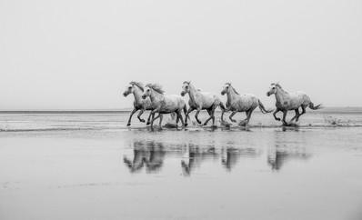 16 CAMARGUE by Doniphane Dupriez