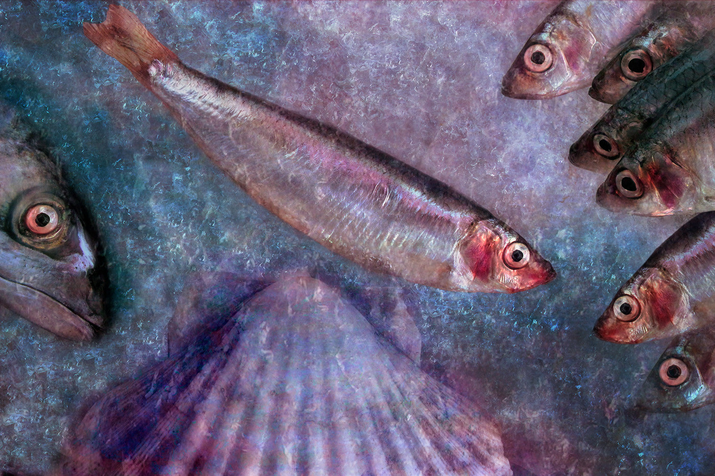 GROUP 1 20 FISH ON ICE by Pam Sherren