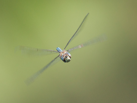 MALE MIGRANT HAWKER by Douglas Hands
