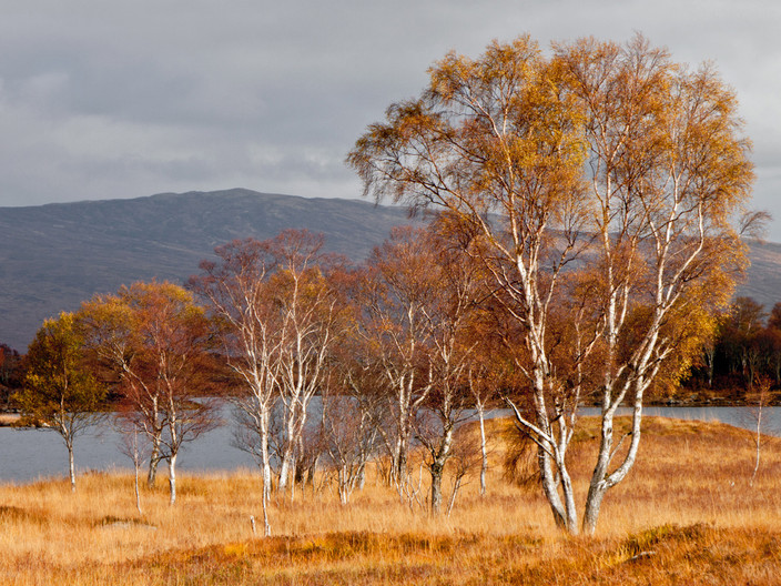 12 AUTUMN TREES by Pam Sherren