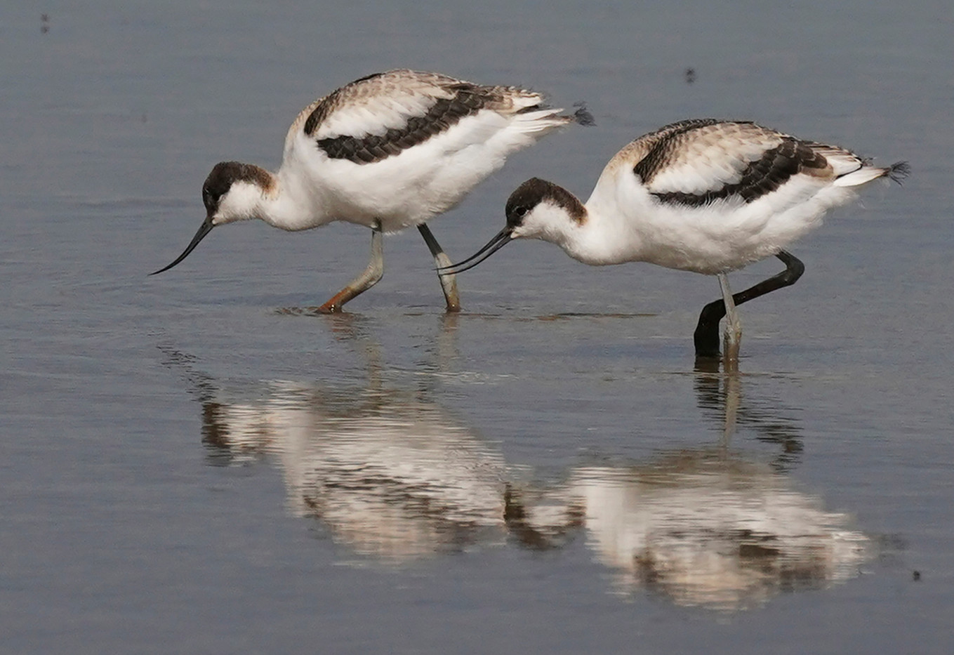 18 AVOCET SYMMETRY by John Hunt