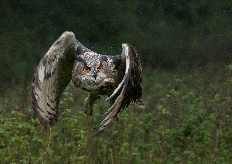 18 OWL IN THE RAIN by John Hunt