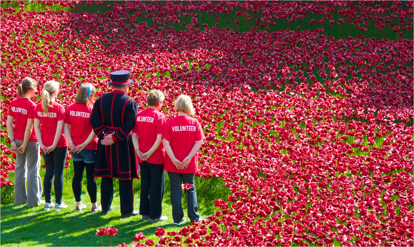 Group 1 18 TOWER OF LONDON POPPY FIELD by Dave Brooker