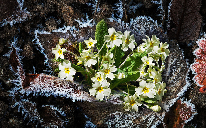 17 WINTER INTO SPRING by Peter Tulloch
