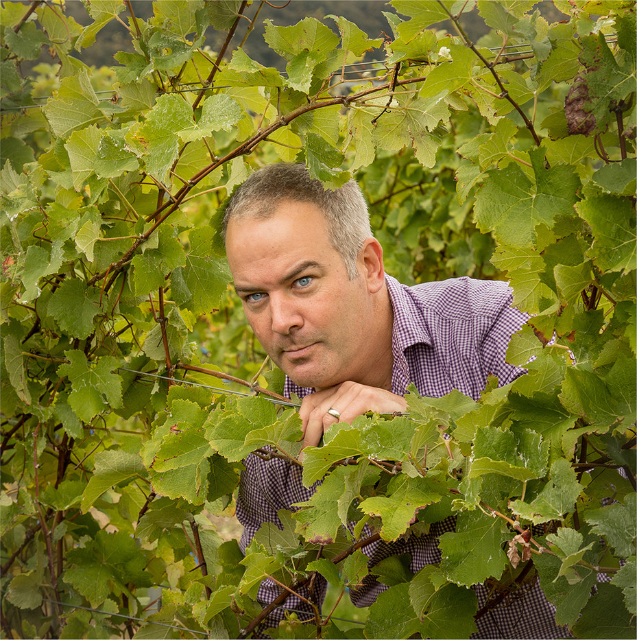 16 EXAMINING THE VINES by David Peek
