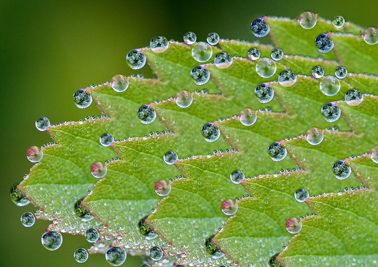 14 NATURE'S BAUBLES by Peter Tulloch