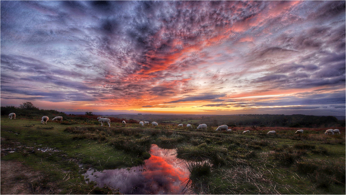 17 SUNSET FROM BUSHY WILLOWS ASHDOWN FOREST by Dave Brooker