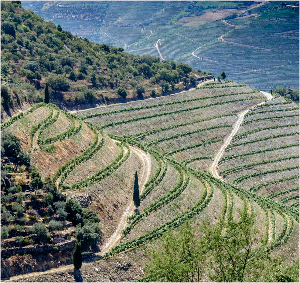 16 DOURO VALLEY WINDING TRACKS  WINDING VINES by Colin  Hurley