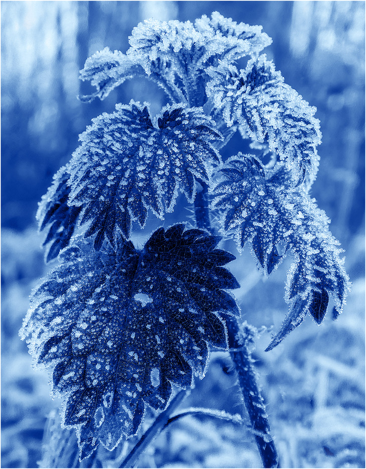 17 BLUE WITH COLD by Colin Burgess